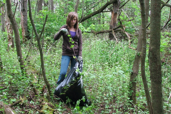Volunteer fills a bag with pulled garlic mustard at Brower Lake Nature Preserve