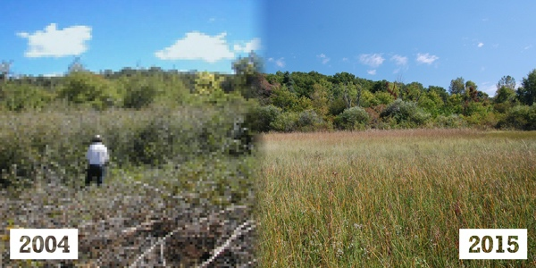 Changes at Lamberton Lake Fen