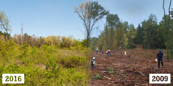 Changes at Wege Natural Area